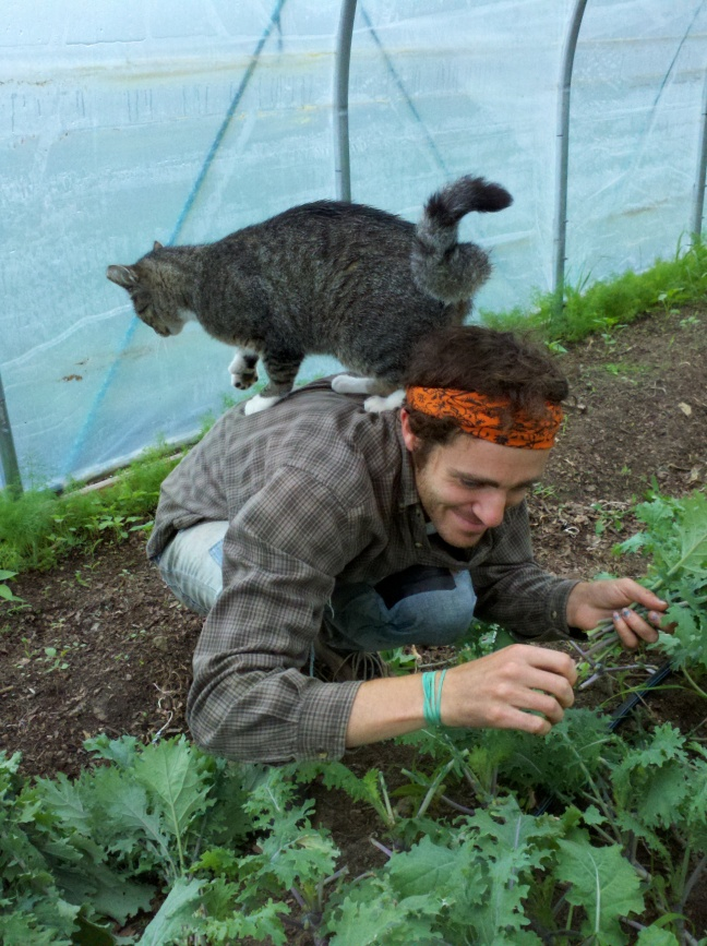Chris and Paris picking kale