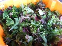new salad mix